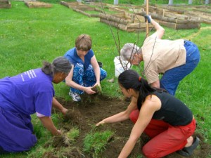 Medicinal herb gardening in low income communities