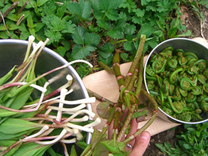 Resource Guide: Harvesting Your Medicine | Numen: The Healing Power